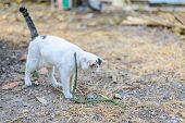 stock photo of garden snake  - White cat fight green snake in untidy dirty garden danger - JPG