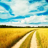 image of oats  - Summer Landscape with Oat Field and Country Road on the Background of Beautiful Sky - JPG