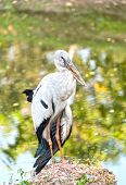 image of swamps  - A heron standing on a rock near the swamp - JPG
