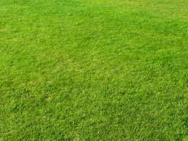 pic of grass area  - Close up of green grass field in summertime - JPG