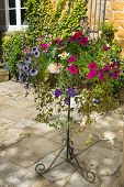 picture of petunia  - Colorful plants in wrought iron stand including begonia petunia ivy - JPG