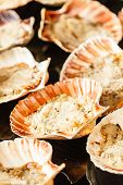stock photo of scallop shell  - Scallops in the shell - JPG