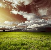 Meadow with green grass and red sky with fluffy clouds poster