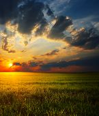 Sunset over field with grass with big fluffy clouds poster
