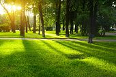 pic of grass area  - Green lawn in city park under sunny light - JPG