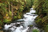 stock photo of mckenzie  - The Mckenzie river Near its headwaters int eh Oregon Cascade Mountain range - JPG