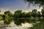 Peaceful Lake Landscape On The Afternoon Sun. Sunny Day On Lake Shore. Peaceful Lake Water And Green poster