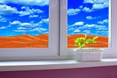 Young Plants Growing In Pot On Window-sill. Sandy Desert Behind Window Of Room. Save The Planet. You poster