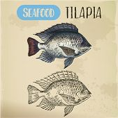 Sign With Tilapia Or Cichlid Fish. Sketch Of Fish Or Hand Drawn Seafood Trophy, Water Animal For Res poster