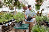 stock photo of pot plant  - Young man looking for potted plants at a garden centre - JPG
