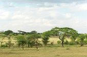 Typical Serengeti Landscape