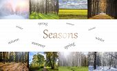 Collage Seasons . All Season. Seasons In One Photo. Winter Spring Summer Autumn. Tree Branch. Grass  poster