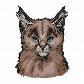 Caracal Baby Tabby, Wild Cat Isolated Hand Drawn Illustration. Wild Cat From Africa, Middle East, Ce poster