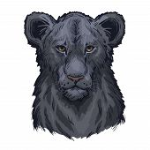 Panthera Leo Vector Baby Tabby Portrait In Closeup. Mammal With Black Furry Coat Feline Animal. Pred poster