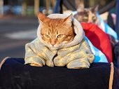 Home Cute Cat In Warm Clothes Sitting Cozy In Baby Carriage In Cold Winter Sunny Day. Adorable Cat C poster
