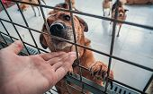 Close-up Of Male Hand Petting Caged Stray Dog In Pet Shelter. People, Animals, Volunteering And Help poster