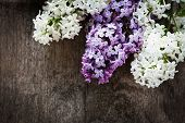 stock photo of lilac bush  - Lilac flowers closeup on the wooden table for design - JPG