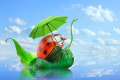 picture of rainy season  - Little traveler on the funny boat - JPG