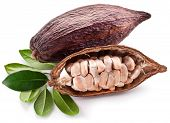 pic of bean-pod  - Cocoa pod on a white background - JPG