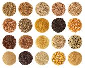 image of millet  - Cereals collection isolated on white background - JPG