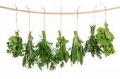 foto of clotheslines  - Fresh herbs hanging isolated on white background - JPG