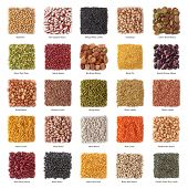 picture of pinto bean  - Legume collection with titles isolated on white background - JPG