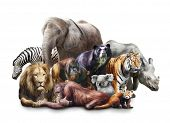 stock photo of ape  - Group of animals on white background - JPG