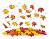 Autumn falling leaves isolated on white background