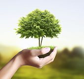 foto of nurture  - Small tree - JPG
