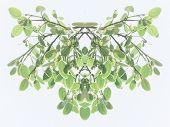 stock photo of transpiration  - Symmetrical decorative foliate pattern of fresh green leaves on hanging branches with a faded toned effect on a light grey background - JPG