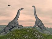 stock photo of pteranodon  - Two brachiosaurus dinosaurs fighting by cloudy sunset - JPG