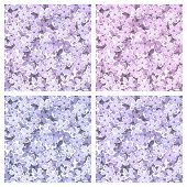 stock photo of lilac bush  - Vector set of four seamless backgrounds with lilac flowers - JPG