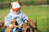 stock photo of shepherds  - little boy playing with puppies belgian shepherd malinois - JPG