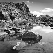 image of oasis  - A beautiful oasis in rural outback Australia in black and white - JPG