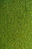 stock photo of grass area  - green grass with empty area for text background - JPG