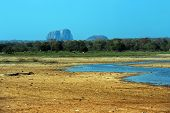 picture of jungle exotic  - Exotic nature in the jungles of Sri Lanka - JPG