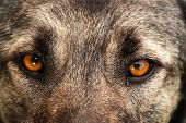 picture of dog eye  - Dog face - JPG
