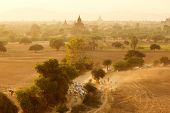 picture of mustering  - Burmese herder leads cattle herd through sunset landscape with ancient Buddhist pagodas at Bagan - JPG