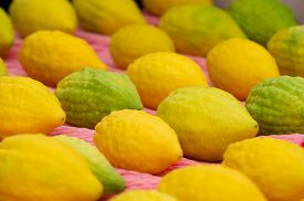 picture of four  - Etrog the yellow citron is on display at a four species market for the Jewish holiday of Sukkot - JPG