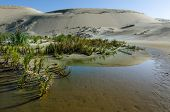 stock photo of quicksand  - Reflection in water of Te Paki Sand Dunes in Northland New Zealand - JPG