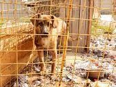 stock photo of homeless  - Pets adoption - JPG