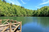 picture of pier a lake  - Close up view of wooden pier in lake side among big trees on blue sky background - JPG