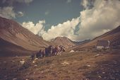 stock photo of broncos  - Mountain landscape with horses - JPG