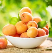 picture of orchard  - Apricot - JPG