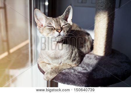 poster of Cat loves to spend time and sit down on scratching post with lounge space. Multi Platform Cat Scratcher. Cat enjoys having sun baths. Cat furniture - scratcher. Cat sits with closed eyes and relaxing