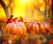 Autumn Halloween Pumpkins. Thanksgiving day background. Pumpkin patch. Beautiful Holiday Autumn fest poster