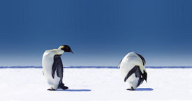 stock photo of funny animals  - Penguins doing sports - JPG