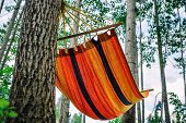 Empty Hammock In The Green Forest. Nobody Is Resting In It. Travel, Adventure, Camping Gear, Nature  poster