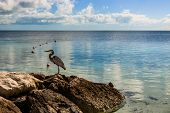 Seagull On The Rock Of Coco Cay Island In The Bahamas. Luxury Beach Oasis In Coco Cay. poster