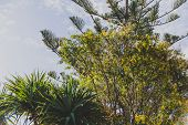 Group Of Beautiful Subtropical Trees Shot In Queensland, Australia In Summer poster